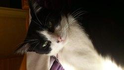 Jerry, chat Gouttière
