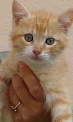 Jesse, chat Gouttière
