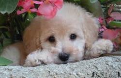 Jessy, chien