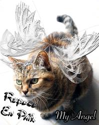 Jessy, chat Gouttière