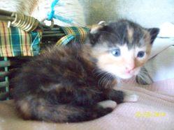 Jessycat, chat