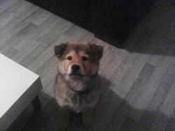 Jethro, chien