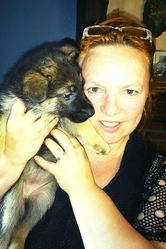 Jewell, chien Berger allemand