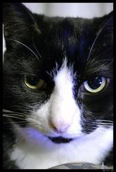 Jibi , chat Gouttière