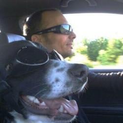 Jim, chien Bouvier bernois
