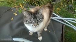 Jim, chat Gouttière