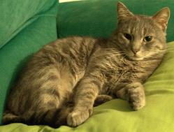 Jimi, chat Gouttière