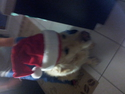 Jimmy, chien