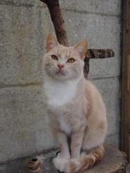Jimy, chat Gouttière