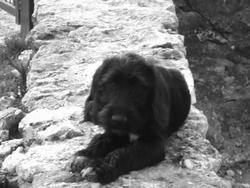 Jina, chien