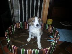 Jipsy, chien
