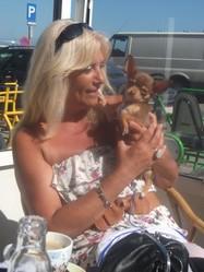 Jipsy, chien Chihuahua