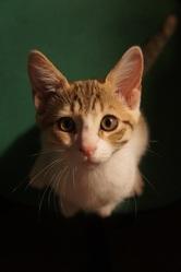 Jodie, chat Gouttière