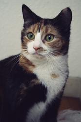 Joey, chat Gouttière
