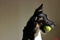 Joia Fragola , chien