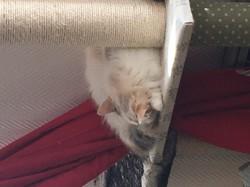 Jolie, chat Gouttière