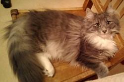Jonava Du Stabburdalen, chat