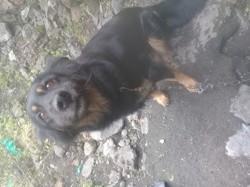 Jonky, chien