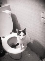 José Le Gitan, chat