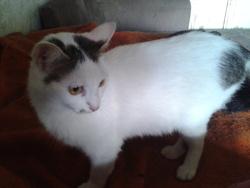 Joséphine, chat Gouttière