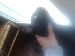 Joska, chat Gouttière