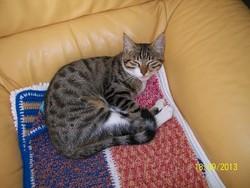 Joy, chat Gouttière