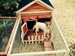 Joyce, chien