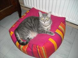 Judith, chat Européen