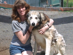 Jugg, chien Husky sibérien