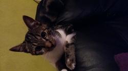 Juka, chat Gouttière