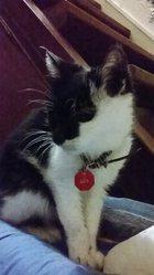 Julie, chat Gouttière