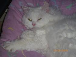 Juliette, chat