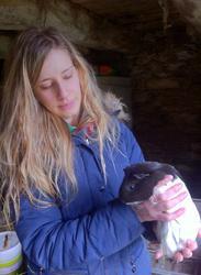 Juliette, rongeur Cochon d'Inde