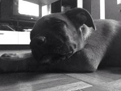 June, chien