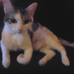 June, chat Gouttière