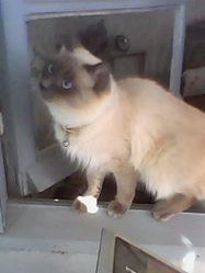 Junior Décédé, chat Gouttière