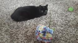 Junior, chat Gouttière