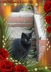 Juniore, chat Gouttière