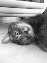 Kahuet, chat Gouttière