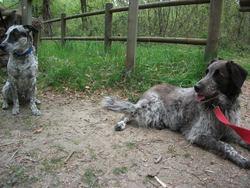 Kaila, chien