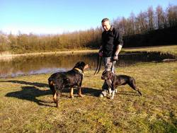 Kaiser, chien Rottweiler
