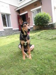 Kaiser, chien