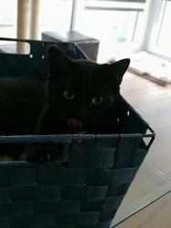 Kaito, chat Gouttière