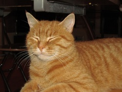 Kaiyo, chat Gouttière