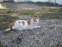 Kaiys, chat Gouttière