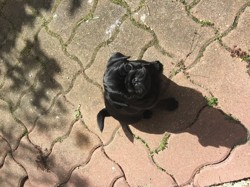 Kalagan, chien Carlin