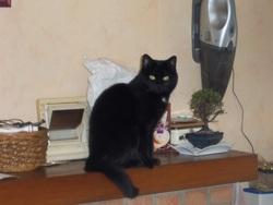 Kali, chat Gouttière
