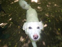 Kaline, chien Border Collie