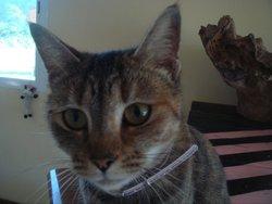 Kaline, chat Gouttière