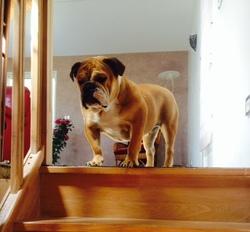 Kalinka, chien